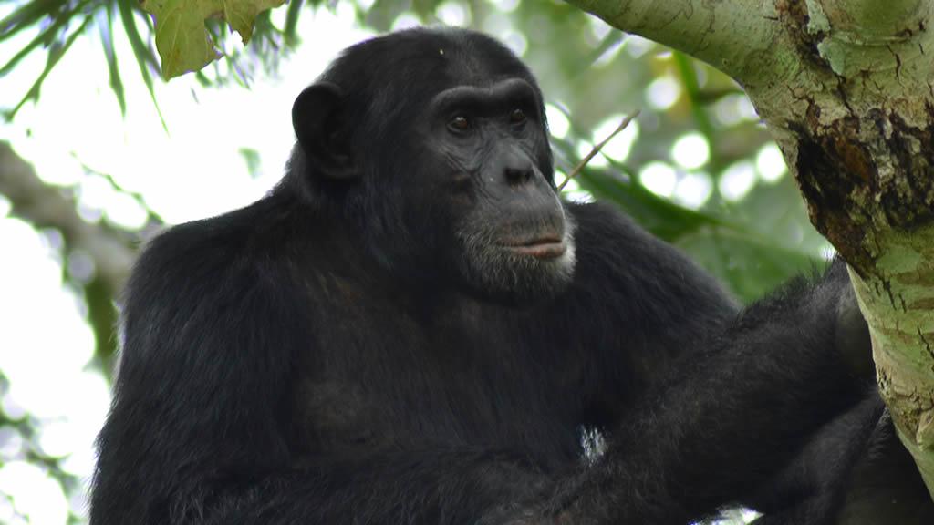 Uganda & Rwanda safari