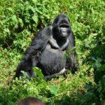 Uganda luxury safari