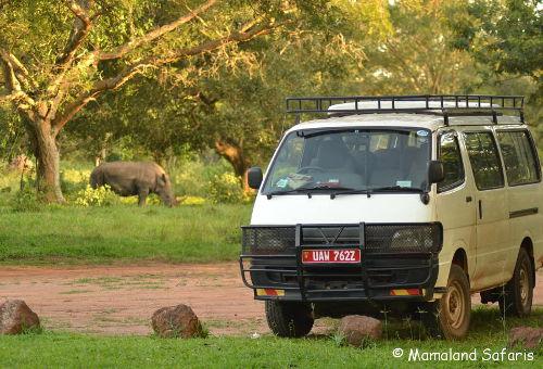 rhino-bus