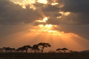 Gorillas & Tanzania safari