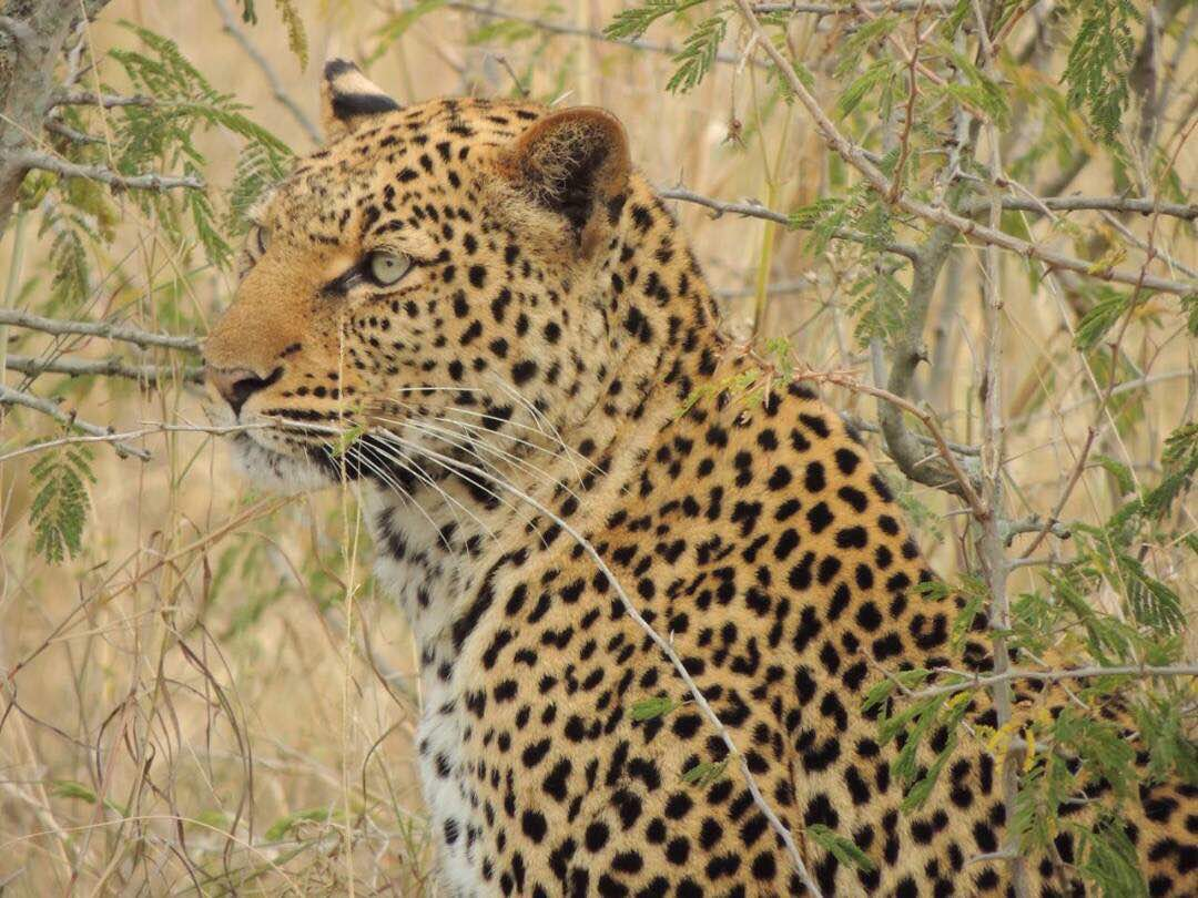 Tailor-made Uganda safari