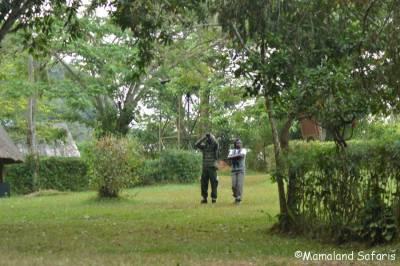 Mpanga & shoebill birding