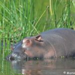 Kibale, Queen & Bwindi safari