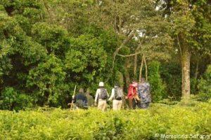 Uganda safari primates