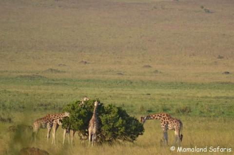 Kidepo safari 5 days