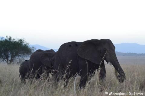 Kidepo vallen national park