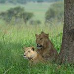 Kidepo safari
