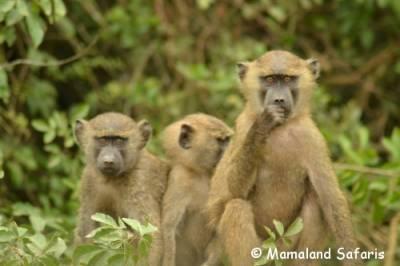 4 days Uganda safari