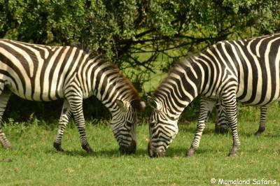 15 days Uganda safari