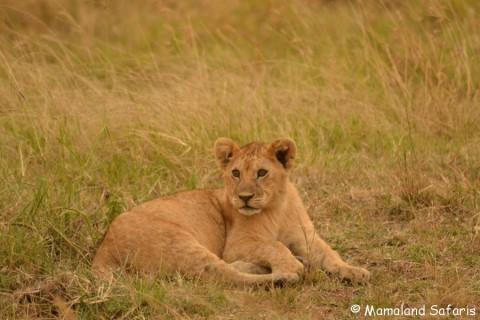 Masai Mara & gorillas safari