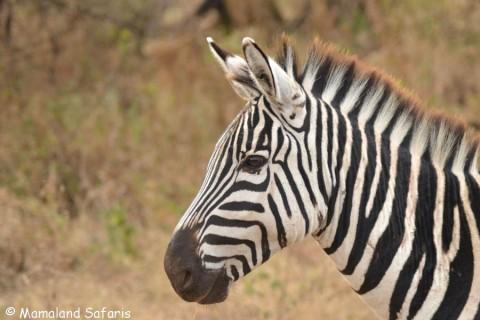 Uganda & Tanzania safari