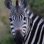 2-days Lake Mburo safari
