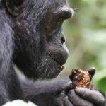 Safari to Uganda & Rwanda