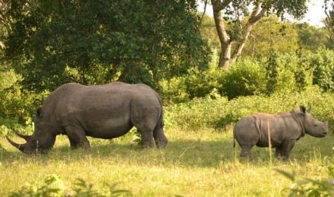 Ziwa Rhino Sanctuary day trip