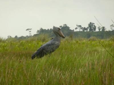 Uganda bird-watching