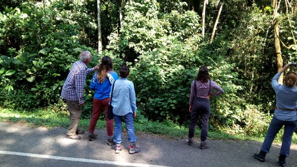 Kibale Forest primates