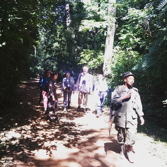 Chimps trekking in Kibale Forest
