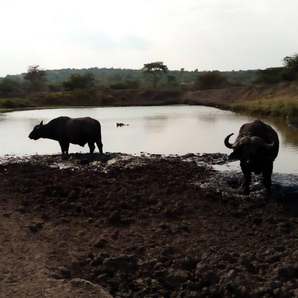 Lake Mburo safari 2 days