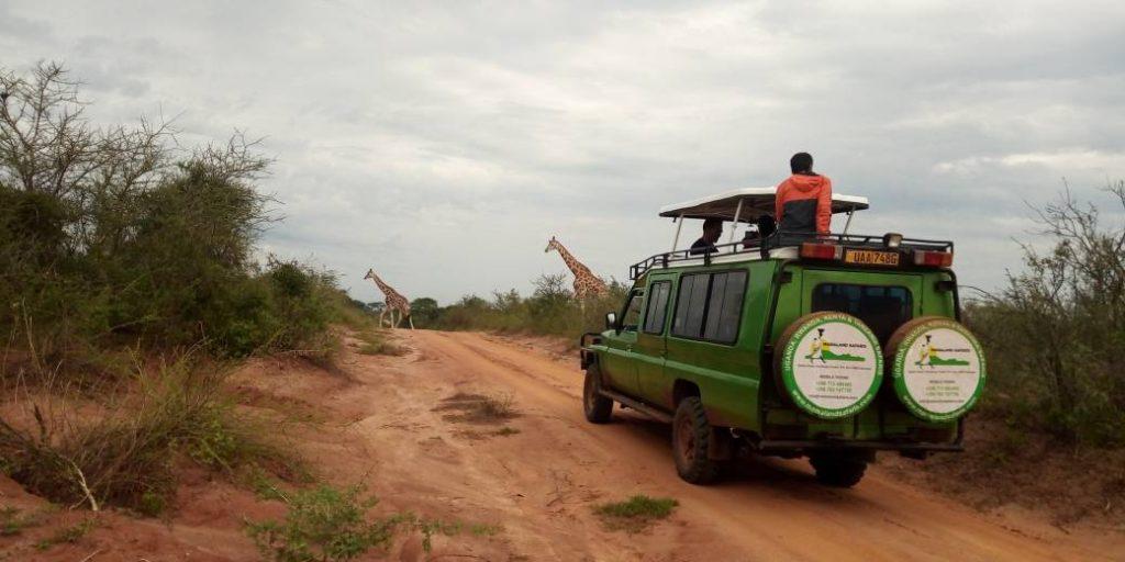 Plan a Uganda safari