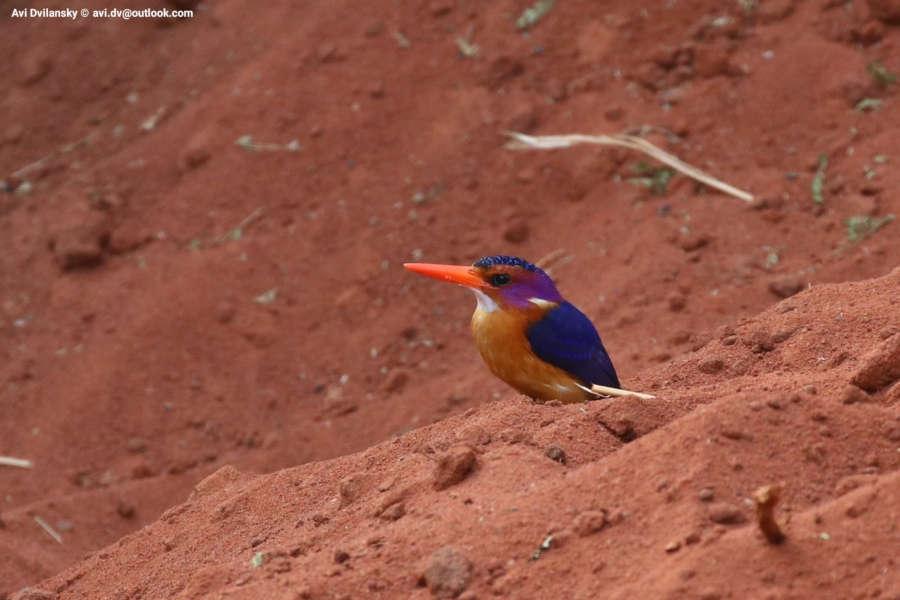 Uganda photo safari