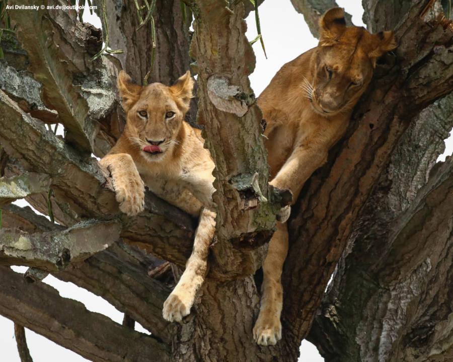 photo safari in Uganda