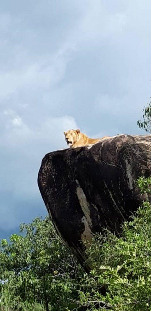 Eastern Uganda safari