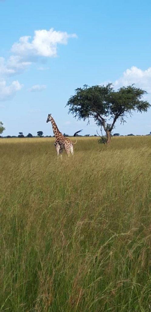 Safari Eastern Uganda