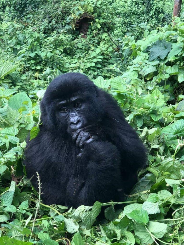 Uganda Tanzania tour