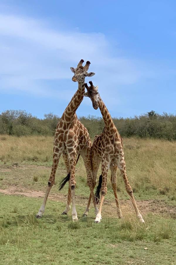 Kenya & Uganda safari