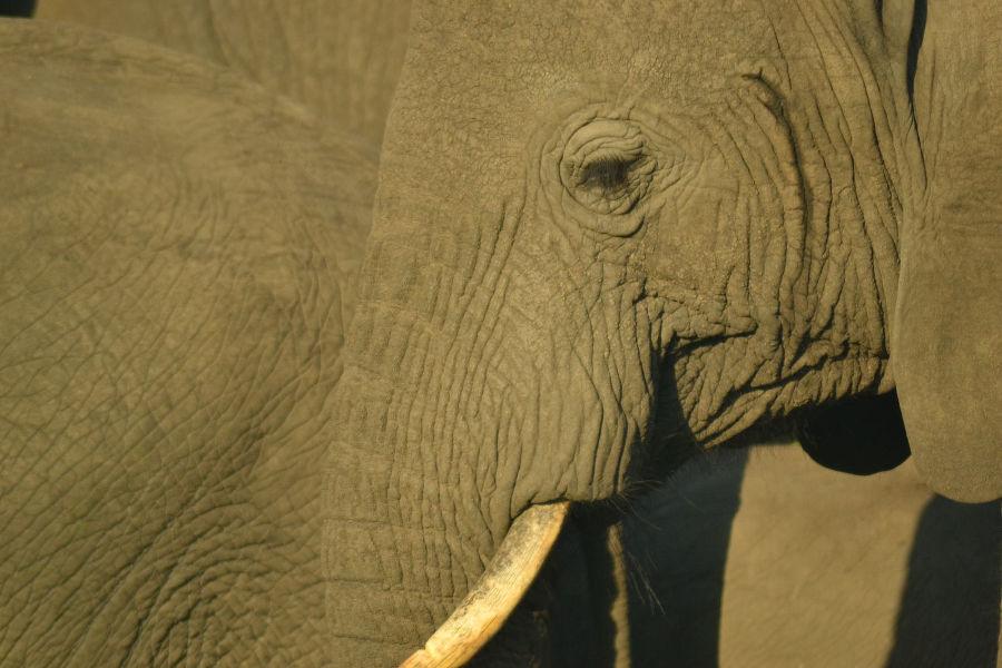 Uganda safari gallery