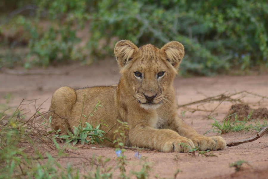 Murchison falls & Kibale forest safari