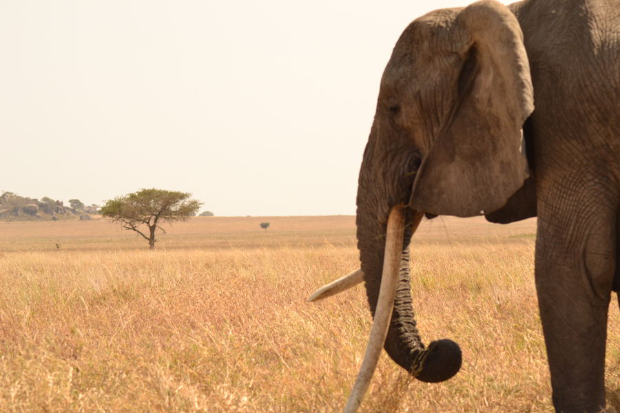 Gorillas & Serengeti safari
