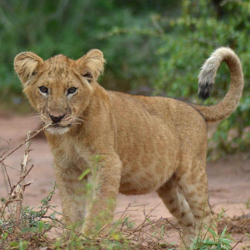 Luxury Uganda safari