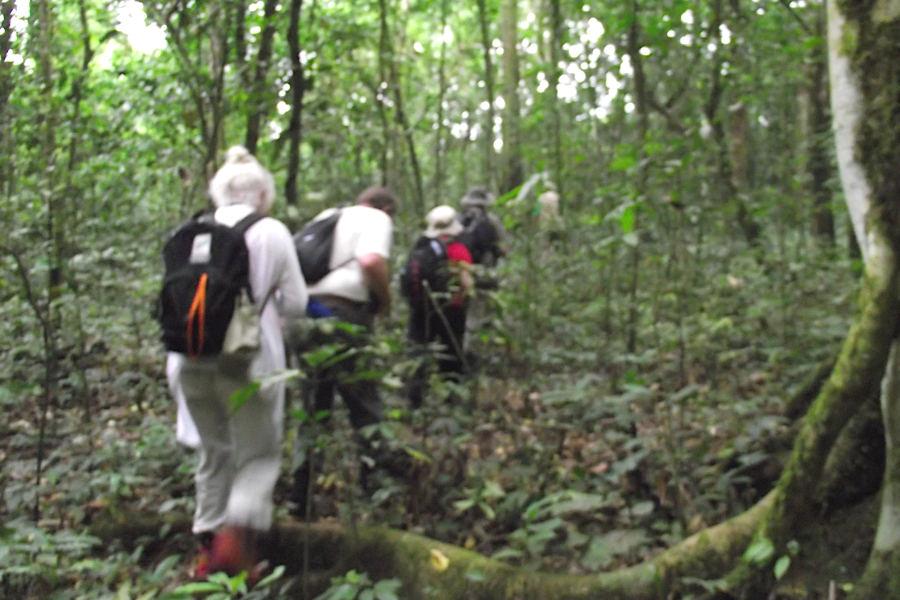 Uganda Rwanda primates safari